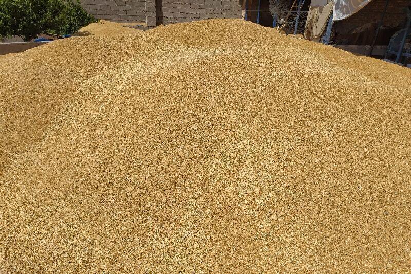 خبرنگاران خرید تضمینی و مباشرتی حدود 870هزار تن محصولات کشاورزی خوزستان