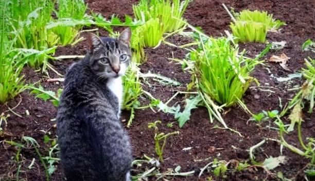 شگرد دور کردن گربه از باغچه و حیاط